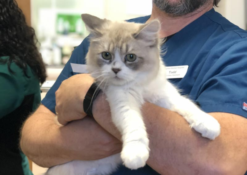 Cat Veterinary Care in Kingston MA